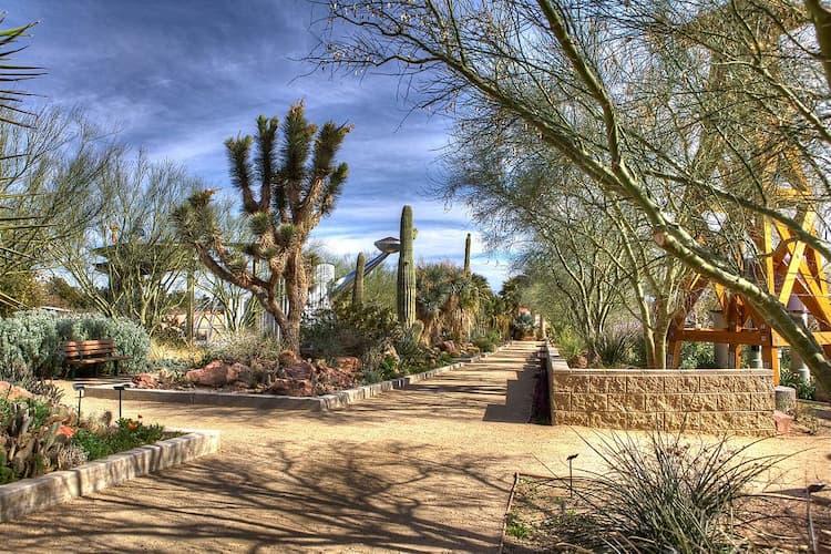 Cactuses in Springs Preserve